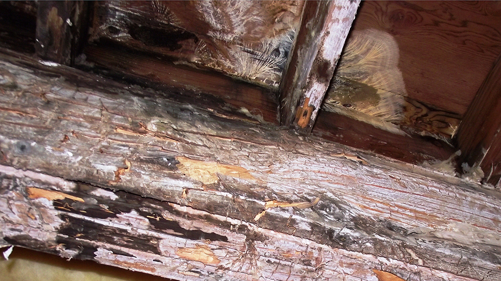 Rotten Deck Repair service in Vancouver